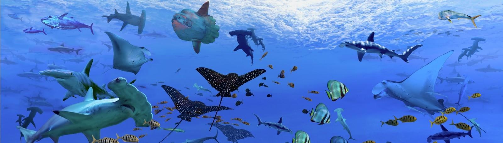 Parkeren Boulogne Sur Mer Aquarium de Nausicaa