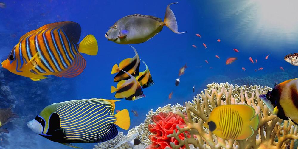 Nausicaa Aquarium in Boulogne-sur-Mer