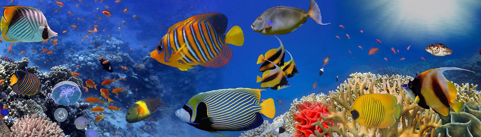 Stationner à Boulogne-sur-Mer Nausicaa Aquarium